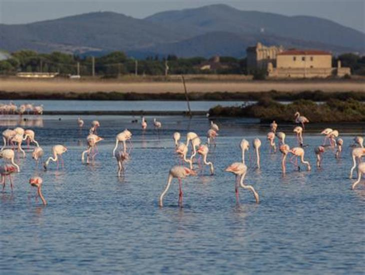 Fenicotteri Orbetello WWF
