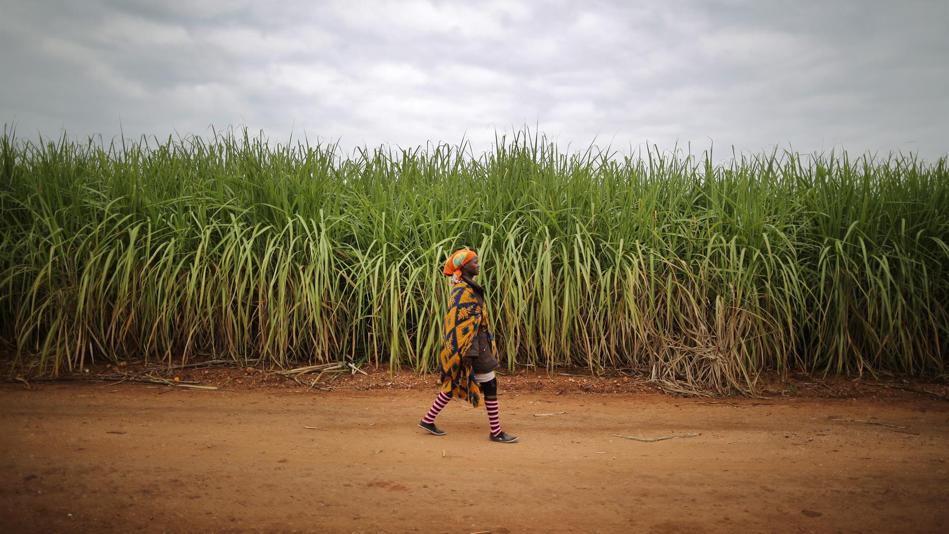 Agriculture Africa:Photo By Dan Kitwood:Getty Images