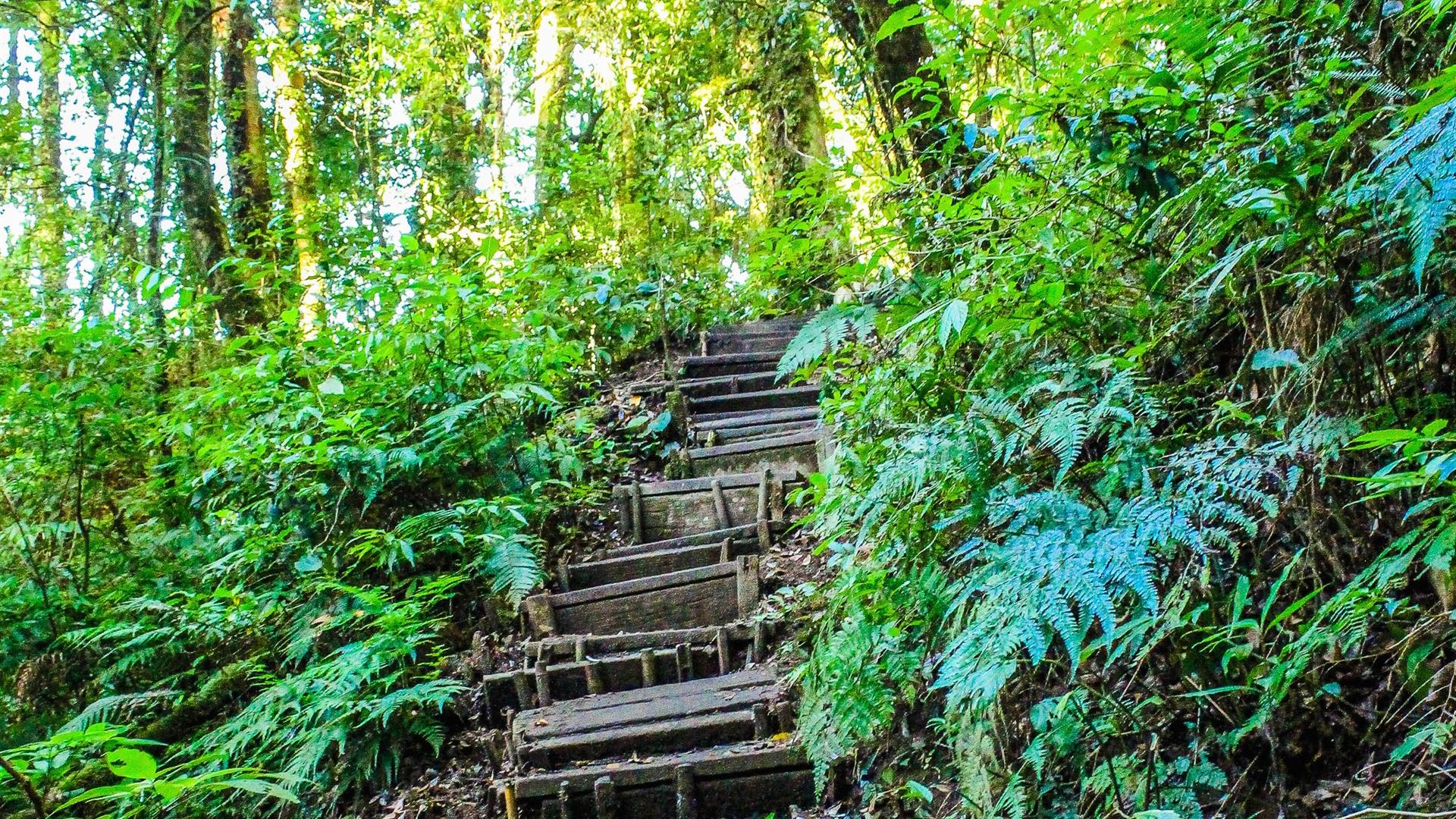 Landscape Photo Of Stair In The Forest 904789