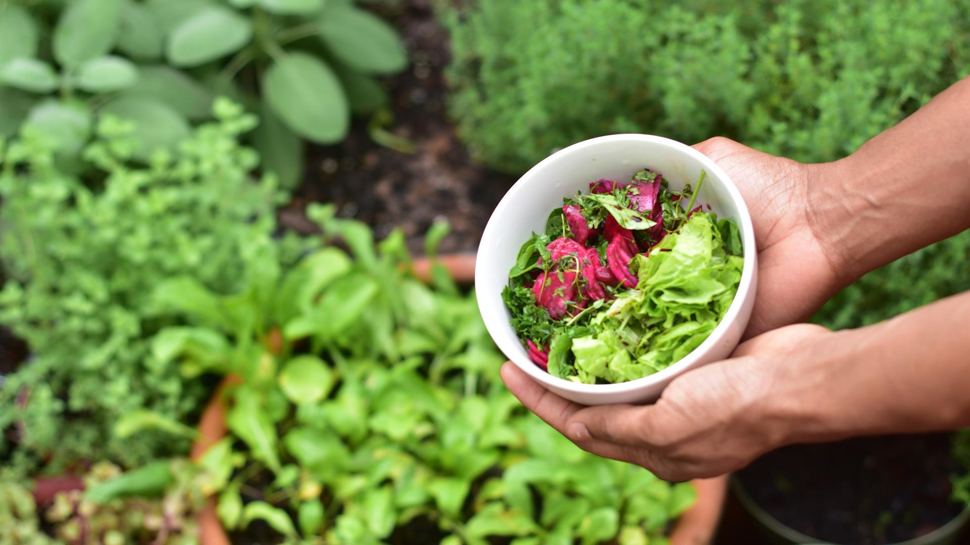 Elias Morr 0B A5dq Py Lgg Unsplash Grow Your Own Organic Food Container Gardening