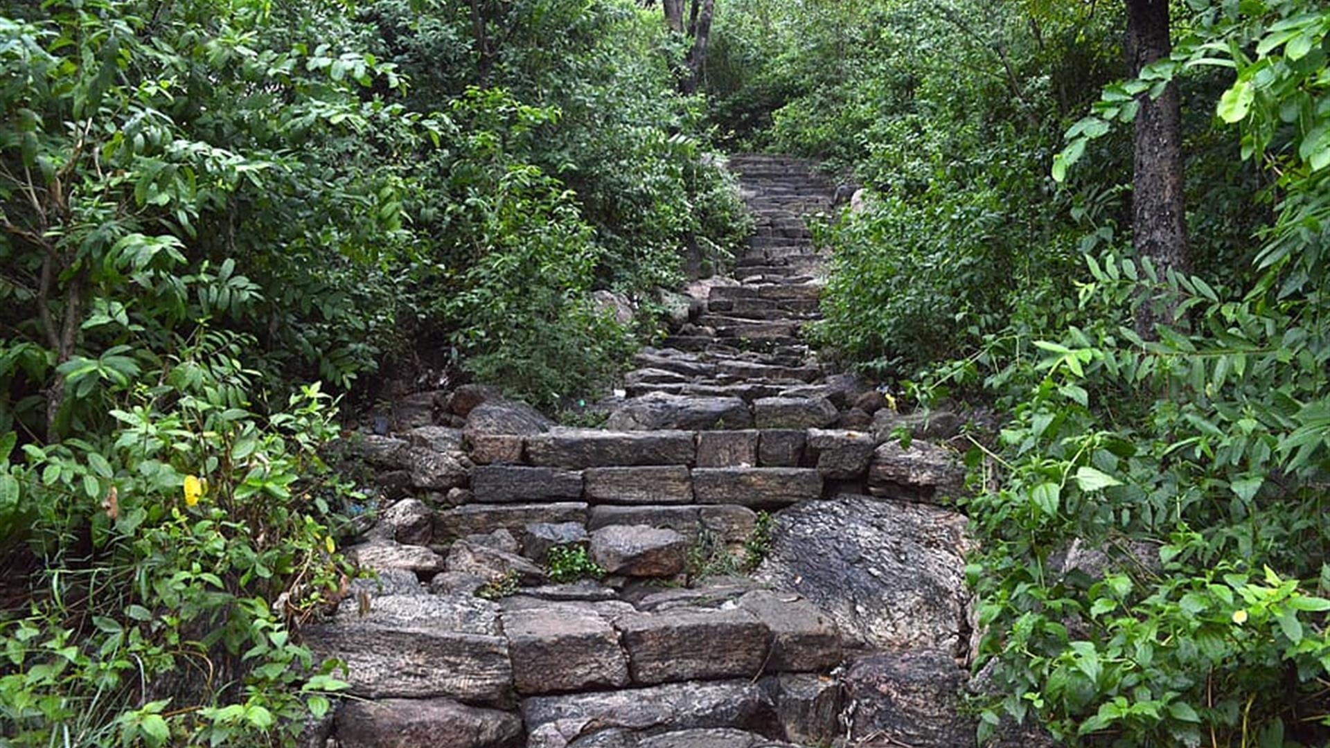 Forest Steps Nature Natural Mountain Woods Stone
